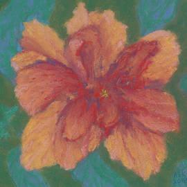 Salmon Hibiscus by Anne Katzeff