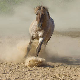 Salt River Wild Horse by Barbara Sophia Travels