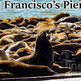 San Francisco's Pier 39 Walruses 2 by G Matthew Laughton