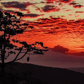San Ramon Sunset Silhouette by Norma Brandsberg