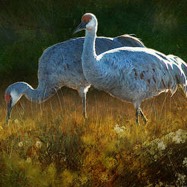 Sandhills Emerge Into Clearing  by R christopher Vest