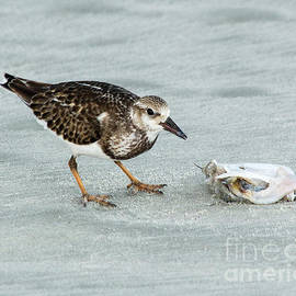 Sandpiper with Shellfish by Michelle Tinger