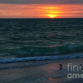 Sandpipers at Lovers Key at Sunset by Dale Kohler