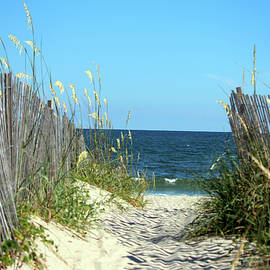 Sandy Path To The Sea by Cynthia Guinn