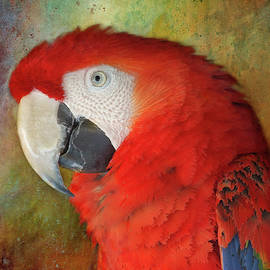HH Photography of Florida - Scarlet Macaw Portrait