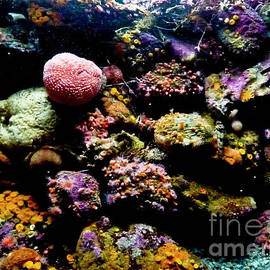 Sea Life by Julieanne Case