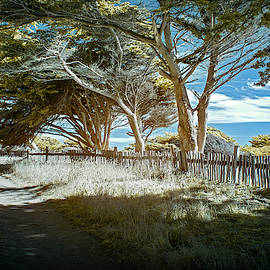 Sea Ranch Coastline by Jon Glaser