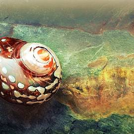 Sea Shell Abstract #2 by Slawek Aniol