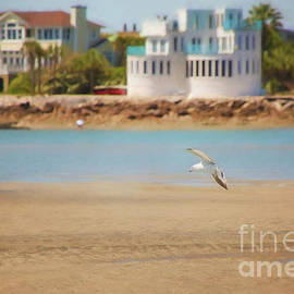 Seagull At Isle Of Palms by Sharon McConnell