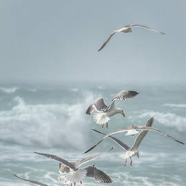 Seagull Dance 0901 by Kristina Rinell