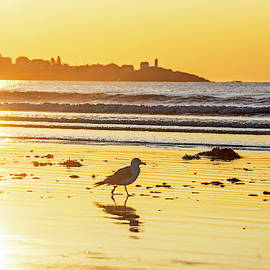 Seagull Strolling Long Sands Beach York Maine Sunrise Nubble Lighthouse Cape Neddick by Toby McGuire