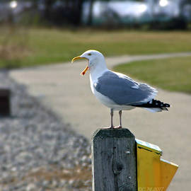 Seagull Yawn by Catherine Melvin