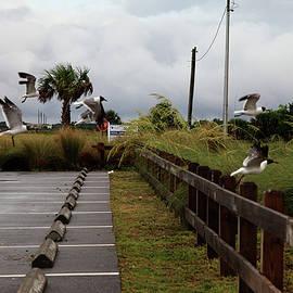 Seagulls at Port St. Joe Marina by Toni Hopper