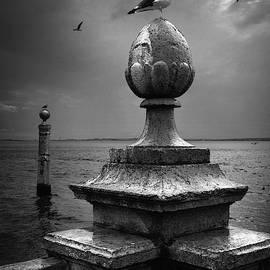 Seagulls of the Tagus by Carlos Caetano