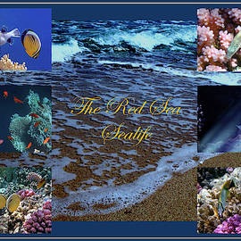 Sealife Collage With A Sandy Beach by Johanna Hurmerinta