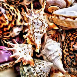 Seashells by Jerome Stumphauzer