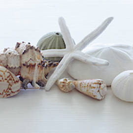 Seashells Panoramic 1 by J Darrell Hutto
