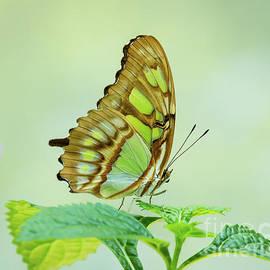 Seen In Green by Sabrina L Ryan