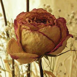 Sepia Rose by Dennis Burton