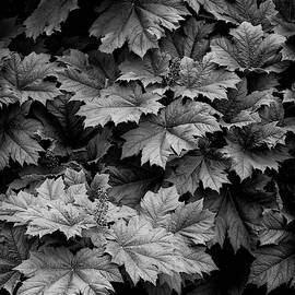 Shadows and Leaves by Steven Clark
