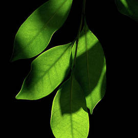 Shady Leaves by Michelle Meenawong