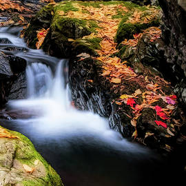Shannon Brook In Autumn Colors by Jeff Folger