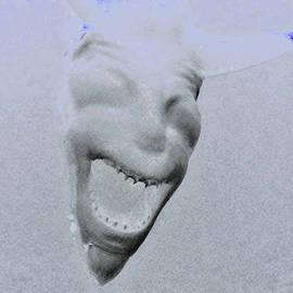 Devil Shark Negative by Rob Hans