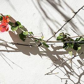Sharp Thorny Shadows - by Georgia Mizuleva