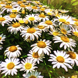 Shasta Daisies - Bright Shiny Faces by Leslie Montgomery