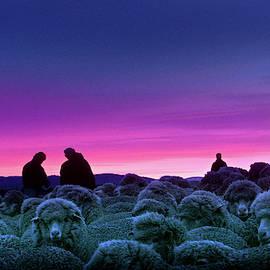 Sheep farming by Wiston Casco