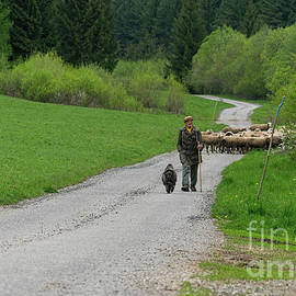Sheep Shepherd With His Dog by Les Palenik