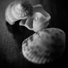 Shells by Matthew Blum