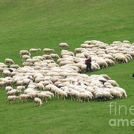 Shepherd With Flock Of Sheep And A Herding Dog by Les Palenik