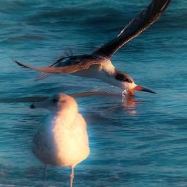 Shoerebirds by John R Williams