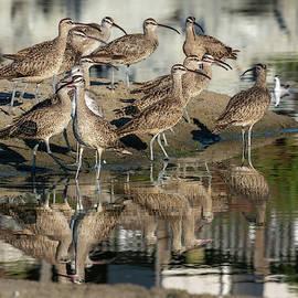 Shorebirds 9/21 by Bruce Frye