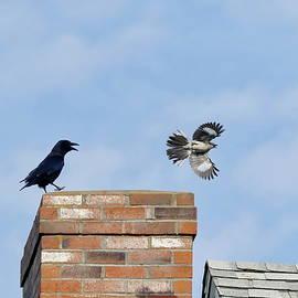 Showdown in the Air by Lyuba Filatova