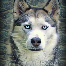Siberian Husky by Heather Naidoo