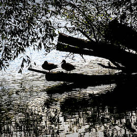 Leif Sohlman - Silhouette Ducks #h9