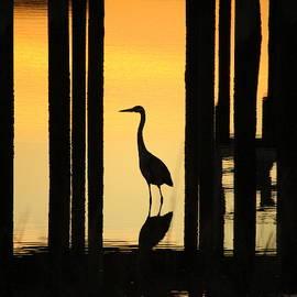 Cynthia Guinn - Silhouette Of A Bird