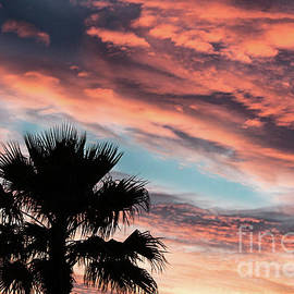 Silhouette Palm by Robert Bales