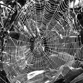 Silver Web by Elisabeth Lucas