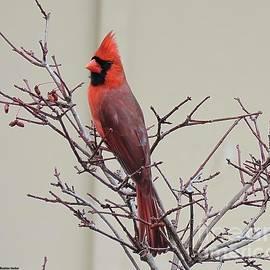 Bobbie Moller - Mr. Cardinal