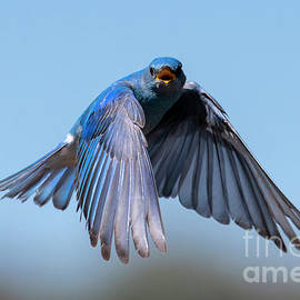 Singing Wings by Mike Dawson