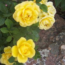 Six Yellow Tea Roses With Moss Rock by Paul - Phyllis Stuart