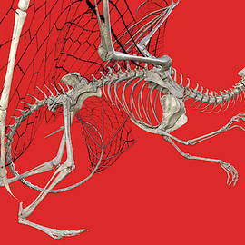 Betsy Knapp - Skeleton Dragon with Red