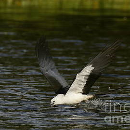 Skimming for a drink by Myrna Bradshaw