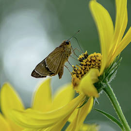 Skipper in the Garden by Lucy Banks