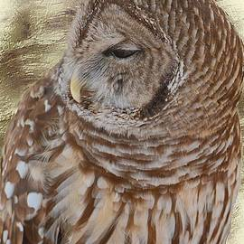 Debbie Green - Sleepy Barred Owl