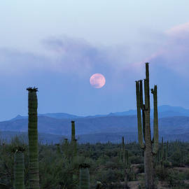 Smoky Moonrise by Cathy Franklin