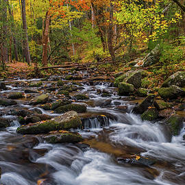 Smoky Mountain Beauty by Eric Albright